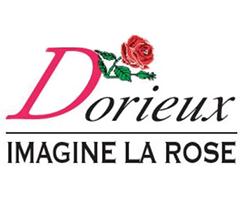 ドリュ Dorieux