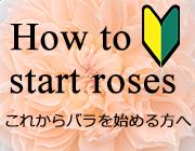 これからバラを始める方へ